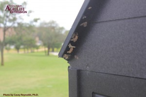 Figure 5. Fall armyworms eggs laid on a golf course water cooler